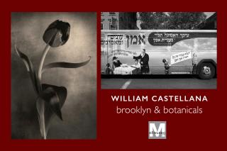 William Castellana: Brooklyn & Botanicals