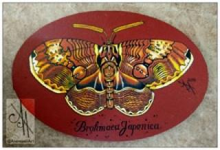 10043-btf01 - Oil Painting - Butterfly, 1