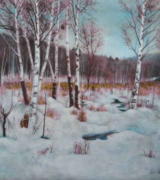 white birch and snow