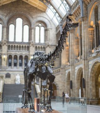 Dippy on Tour: A Natural History Adventure